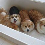 Cách chăm sóc chó con khoa học