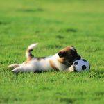 Một số bài huấn luyện chó căn bản