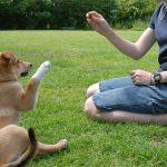 Bí quyết huấn luyện chó