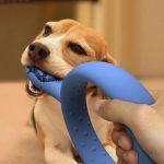 Vệ sinh răng miệng cho chó
