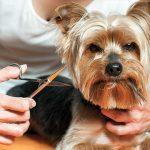 Cách cắt tỉa râu cho chó