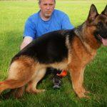 Một số phương pháp huấn luyện chó tại nhà
