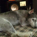 Điều trị bênh bại liệt ở chó