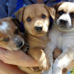 3 căn bệnh mà chó hay mắc phải