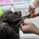 Cách cắt tỉa móng chó cún