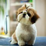 Nguyên nhân bệnh tiêu chảy ở chó
