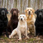 Điều trị bênh viêm tử cung ở chó