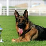 Các bệnh thường gặp ở chó
