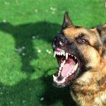 Cách nhận biết chó bị dại