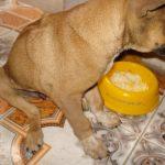 Cách chăm sóc khi chó bị gãy xương