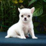 Cách điều trị nôn và đi ỉa ở chó