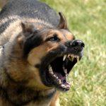 Nguyên nhân khiến chó hung hăng