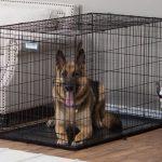 Cách chọn chỗ ở cho chú cún