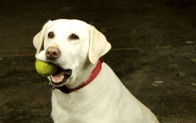 dog-and-tennis-ball