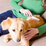 5 cách chăm sóc bộ lông chó