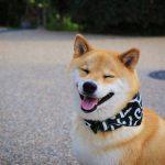 Chó Nhật
