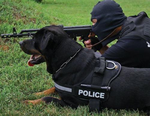 cho-rottweiler-3