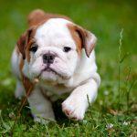 13 điều thú vị mà một chú chó cảm nhận được từ bạn