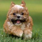 9 khả năng cảm nhận của loài chó