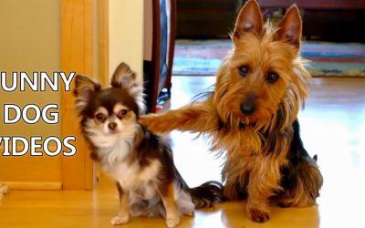 Khoảnh khắc cực đáng yêu của những chú chó dễ thương