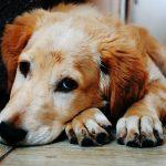 Những điều không phải ai cũng biết về loài chó