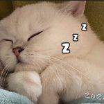 Vãn Vãn | Tiểu Tiên Nữ Ngủ Mà Ngáy Là Sao?? 😂 | Pets TV
