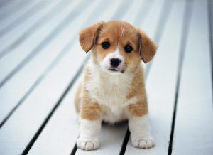 5 lưu ý khi nuôi chó con