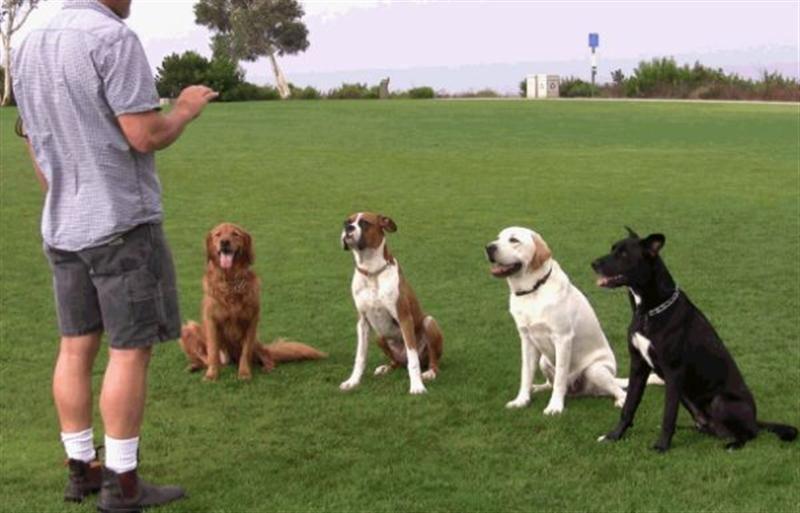 Những điều cần chú ý khi huấn luyện chó
