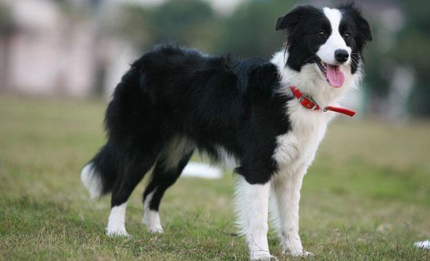 Cách chăm sóc chó khỏe mạnh
